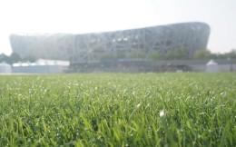 当鸟巢遇上混合草黑科技,中国将开启数千亿元运动草坪产业爆发期