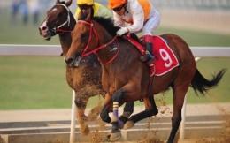 武汉将在10月举办2020年全国速度赛马锦标赛