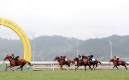 农业农村部:推进粤港澳大湾区马匹运动和相关产业发展