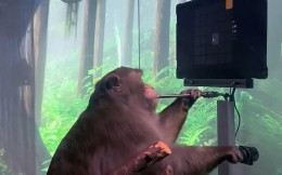 马斯克公布猴子用意念打游戏视频 首款产品能让瘫痪者玩手机