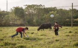 广西拟推三年行动计划振兴乡村足球 力争五年内培养球员进入各级国家队